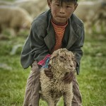 Tibet_boy-shepherd_sheep_quinghai copy