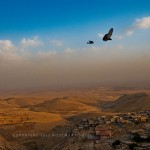 Birds soar over the plains of Syria