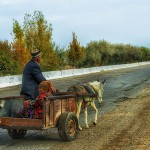 Uzbek couple drive down a modern highway in a donkey cart