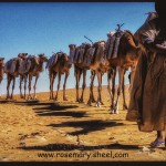 Touareg man leads his camels to Tombouctou