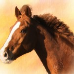 digital painting horse_chestnut with blaze_portrait