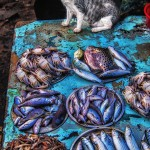 India_kochi_cat_fishmarket