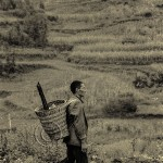 A Chinese farmer with traditional basket on his back walks past fields.