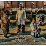 Gypsy men with their animals earn money at a highway stop in India