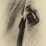 Close up photo of horse's eye with vignette