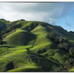 Rolling hills of Paso Robles California